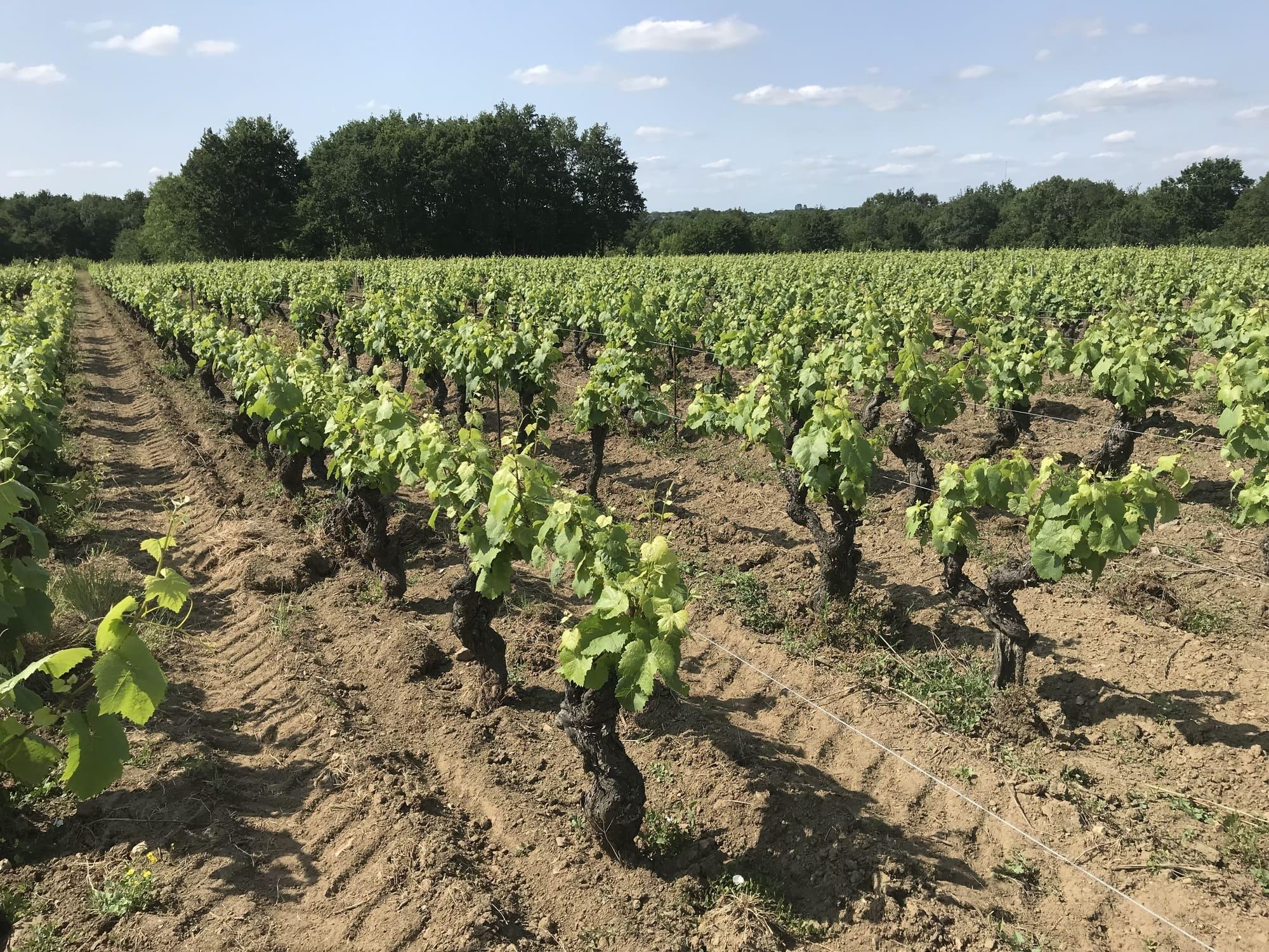 Famille Lieubeau - Vigne Rang